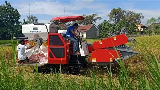 Effisiensi Tenaga Kerja dan Tekan Kehilangan hasil Panen, Dinas Pertanian Dapat Bantuan Mesin Panen Dari Kementrian.