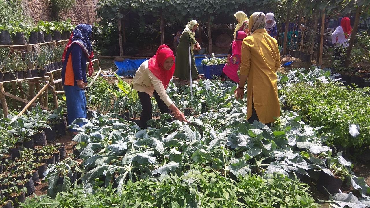 Ibu Ibu Warga Desa Geni Langit  Untung Jutaan Rupiah Dari Berdayakan Pekarangan Rumah untuk Bertanam Sayur