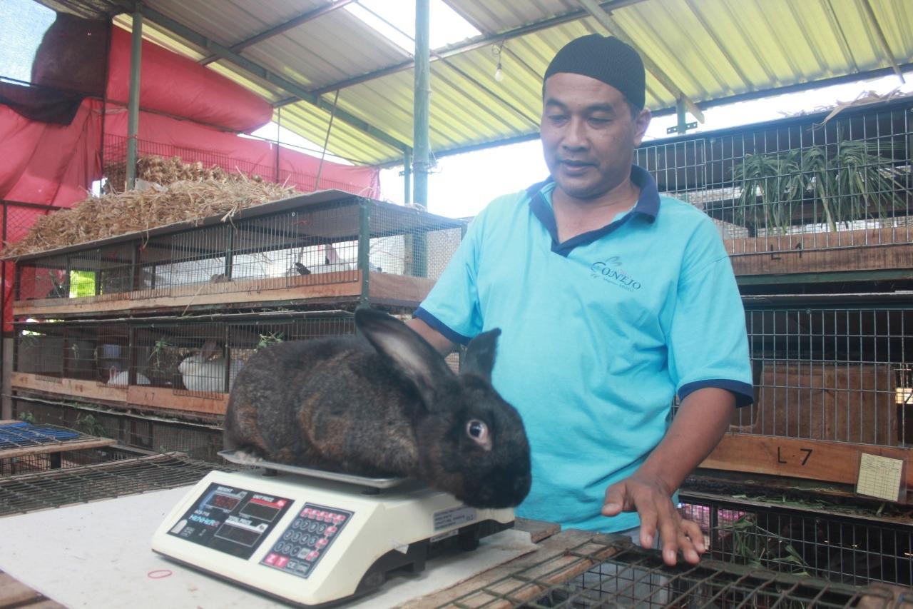 Resmi Berbadan Hukum, Kelompok Peternak Kelinci di Magetan Siap Kembangkan Nilai  Ekonomis Kelinci.